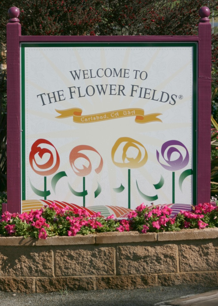 welcome-to-the-flower-fields
