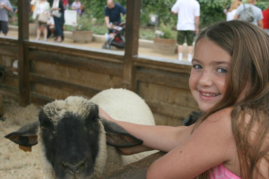 pet-a-lamb