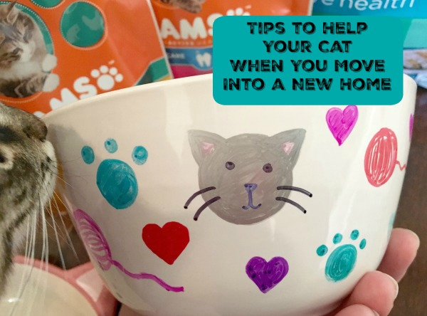 iams-tips-to-help-your-cat-when-you-move