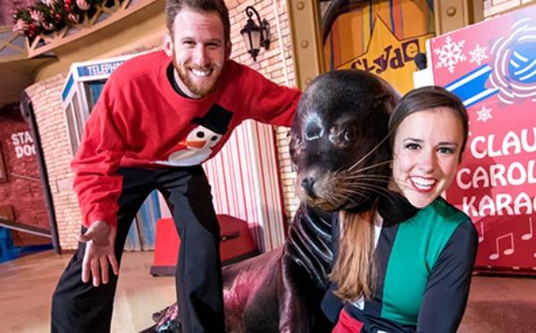 seaworld-christmas-sea-lions